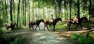 hästar bokskog