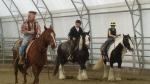 Nära livet - ett hästarbete med kor