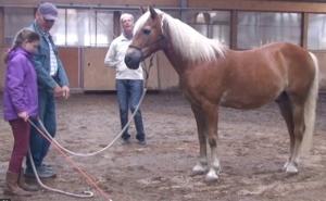 Hur man får en bra relation till sin häst - Vänskap, respekt och uppmärksamhet