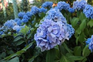 blommor 3