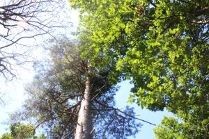 Träd uppåt
